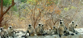 Kumbhalgarh Wildlife Sanctuary
